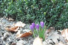 Rpark-voorjaar-lelies-en-bladeren