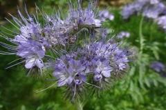 Bloemen-langs-de-herselseweg