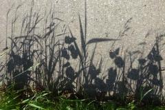 Schaduw-van-gras-op-betonnen-fietspad