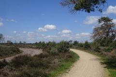 Strabrechtse-Heide-01